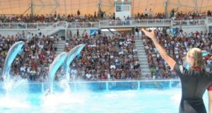 zoomarine 300x160 - Diocesi di Roma, il 21 giugno la festa degli oratori estivi
